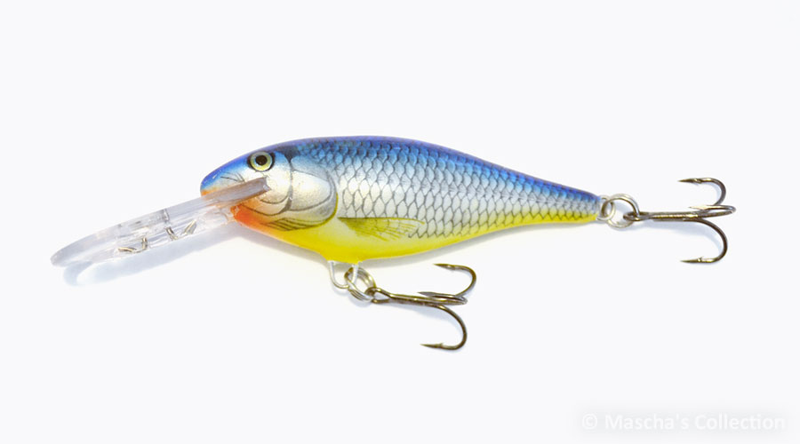 Blue Shiner (BSH)